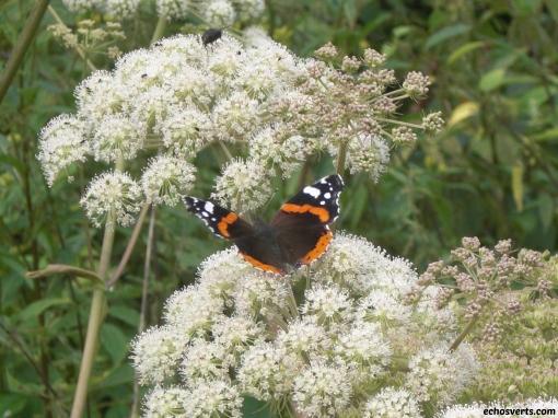 Les papillons et Natasha, une belle histoire ! Un petit Vulcain nous le rappelle.